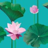 Dwa różowy lotos na badylach z liśćmi na błękitnym tle Wektorowa ilustracja, przedmioty z przezroczystością bezszwowy wzoru ilustracji