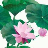 Dwa różowy lotos na badylach z liśćmi na białym tle Vect royalty ilustracja