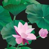 Dwa różowy lotos na badylach z liśćmi na czarnym tle Wektorowa ilustracja, przedmioty z przezroczystością bezszwowy wzoru royalty ilustracja