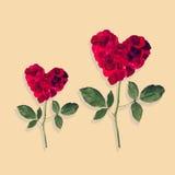 Dwa różany serce Fotografia Stock