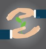 Dwa ręki ochrania młodej zielonej rośliny Obrazy Stock