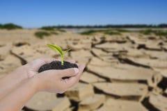 Dwa ręki trzyma małego drzewa nad suchą ziemią z krakingową teksturą Fotografia Royalty Free