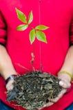 Dwa ręki trzyma zielonej młodej rośliny zdjęcia royalty free