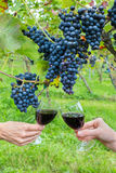 Dwa ręki wznosi toast z czerwonym winem blisko błękitnych winogron Zdjęcia Stock