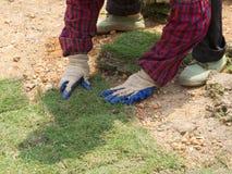 Dwa ręki Zasadzają Nowe traw płytki Obrazy Royalty Free
