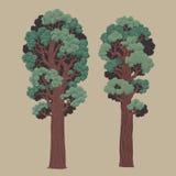 Dwa redwoods Fotografia Stock