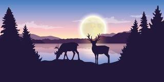 Dwa renifera jeziorem przy nocą z księżyc w pełni natury purpurowym krajobrazem royalty ilustracja