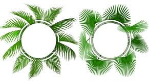 Dwa rodzaju zieleni tropikalni palma liście Miejsce dla reklamowa?, zawiadomienia ilustracja ilustracji