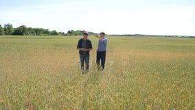 Dwa rolnik pozyci w pszenicznym polu, egzamininują corp przy zmierzchem zbiory wideo