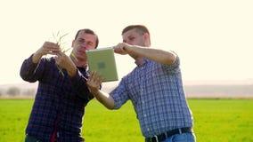 Dwa rolnik pozyci w pszenicznym polu i patrzeć pastylkę, egzamininują corp przy zmierzchem Dwa rolnika w polu zbiory