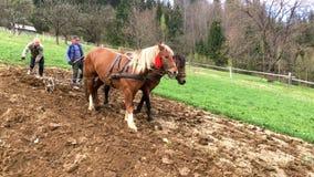 Dwa rolnika w obszarach wiejskich orzą ziemię z pługiem który ciągnie parę podpalani silni konie, zbiory