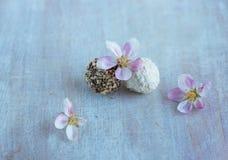 Dwa round cukierku i jabłka kwiatu Zdjęcia Royalty Free