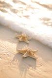 Dwa rozgwiazda na dennej ocean plaży w Floryda, miękki delikatny wschód słońca Obraz Stock