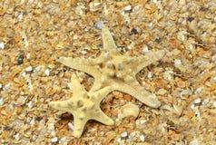 Dwa rozgwiazda na morze plaży Obrazy Royalty Free