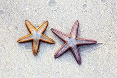 Dwa rozgwiazda na piaska tle na plaży Zdjęcie Stock