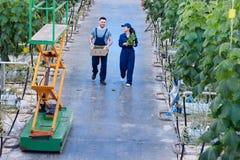 Dwa Rozochoconego pracownika w szklarni obrazy stock