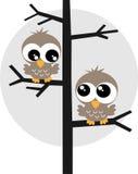 Dwa słodkiej sowy w drzewie Fotografia Stock