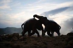 Dwa słonia byka oddziałają wzajemnie i komunikują podczas gdy sztuka bój Zdjęcie Stock