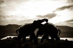 Dwa słonia byka oddziałają wzajemnie i komunikują podczas gdy sztuka bój Obrazy Royalty Free