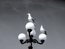 Dwa Seagulls czeka trzeci jeden Zdjęcia Stock