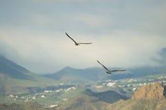Dwa seagulls lata stronę strona - obok - obrazy stock