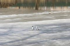 Dwa seagulls stojak na lodzie, wiosna obrazy stock