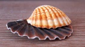 Dwa seashell części Zdjęcia Royalty Free