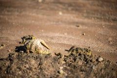 Dwa seashells na piasku ostrygi na piasku Zakończenie Zdjęcia Stock