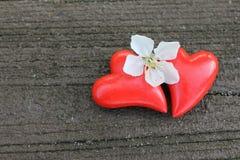 Dwa serca z czereśniowym okwitnięciem na drewnie Zdjęcie Royalty Free