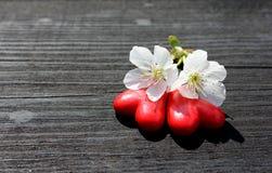 Dwa serca z czereśniowym okwitnięciem na drewnie Zdjęcie Stock