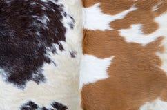 Dwa skóry krowy Zdjęcia Stock