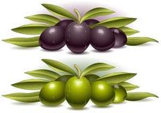Dwa skład oliwki Obraz Stock