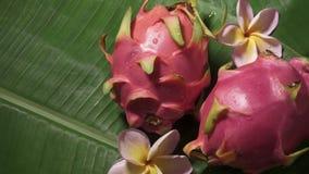 Dwa smoka Świeża Surowa Egzotyczna Tropikalna Tajlandzka owoc także dzwonił Pitayas Wiruje na Bananowym liściu zbiory