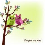 Dwa sowy siedzi na drzewie Zdjęcie Royalty Free
