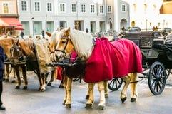 dwa sprzężni frachtów konie Fotografia Royalty Free