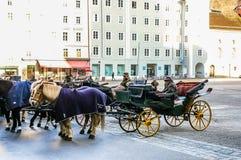 dwa sprzężni frachtów konie Zdjęcie Royalty Free