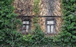 Dwa starego pudełkowatego okno i porosłej fasada obrazy stock