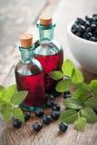 Dwa starej rocznik butelki tincture i czarne jagody obraz stock