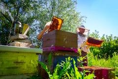 Dwa starszego apiarists, pszczelarki sprawdzają pszczoły na honeycomb fotografia stock