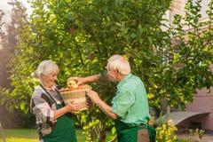 Dwa starszego ludzie podnosi jabłka zdjęcie stock