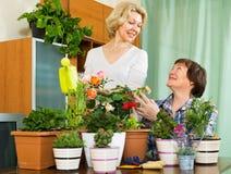 Dwa starszej kobiety z flowerpots Obrazy Stock
