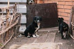 Dwa szczeniaka Ładny obsiadanie Fotografia Stock