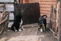 Dwa szczeniaka Ładny obsiadanie Fotografia Royalty Free