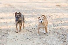 Dwa szczeniaka psa Mały portret Fotografia Stock