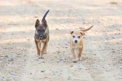 Dwa szczeniaka psa Mały portret Obraz Royalty Free