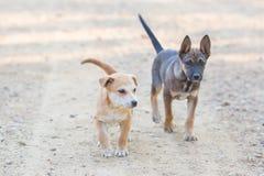Dwa szczeniaka psa Mały portret Zdjęcia Stock