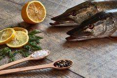 Dwa szczupaka świeża ryba na drewnianym stole z pikantność, koper, Himalay obrazy stock
