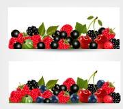 Dwa sztandaru z wyśmienicie dojrzałymi jagodami. Fotografia Stock