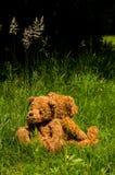 dwa teddybears traw obraz stock