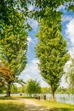 Dwa topoli drzewa fotografia stock